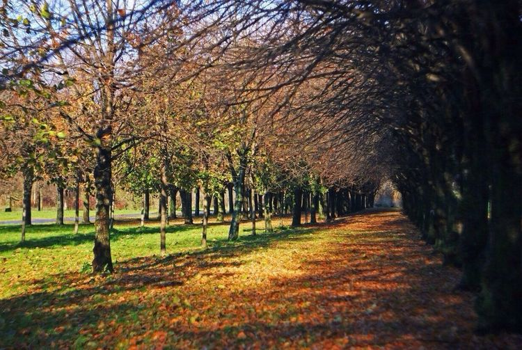 My Favorite Place Tree Season  Beauty In Nature Autumn Park - Man Made Space Nature Non-urban Scene Day Leaves