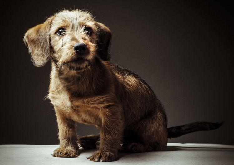 Sweet puppy on