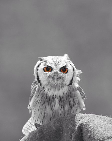 Close-Up Portrait Of Owl Against Sky