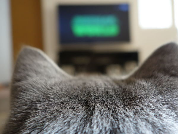 Cat Cat Watching TV Curiosity Perspective Watching Tv Rethink Things