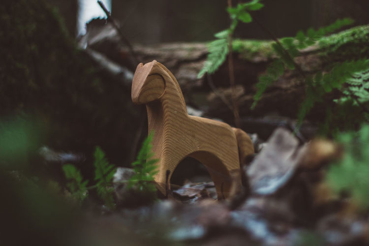 Forest Nature Women Wood Wood - Material Toy Toys Wooden Toys Wooden Horse Horse Tree Moss Summer Autumn Selective Focus Plant Land Day Field No People Plant Part Leaf Outdoors Close-up Growth Creativity Animal Representation Art And Craft Brown Metal Old Small