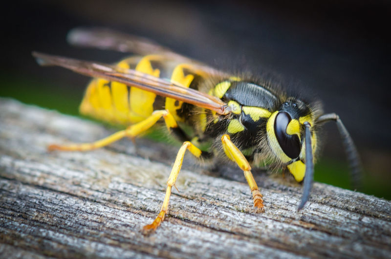 Animal Themes Animal Wildlife Animals In The Wild Close-up Day Insect Nature No People One Animal Outdoors Selective Focus Wood - Material Yellow