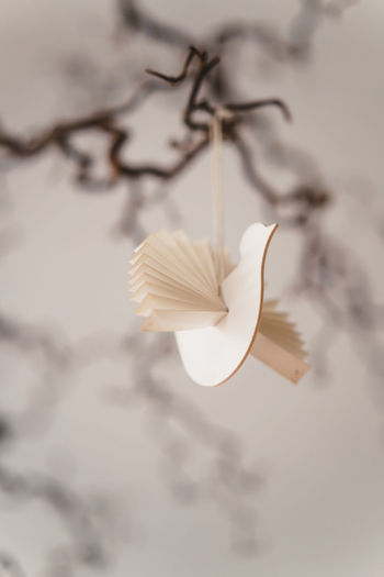 Craft Items Craftsmanship  Vintage Craft Arts And Crafts Close-up No People Plant Beauty In Nature White Color Nature Focus On Foreground Selective Focus Indoors  Flower Flowering Plant Vulnerability  Hanging Fragility Decoration Low Angle View Growth Petal Creativity