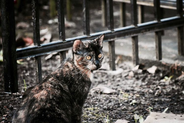 Pet Photography  Outside Photography Cats Backyard Photography Feline Portraits Cats Of EyeEm Domestic Cat Animal Themes Domestic Animals One Animal Mammal Pets Day Feline Outdoors No People Close-up Pets Of Eyeem Outdoor Photography My Pets Cat Portrait My Cat Pet Nature