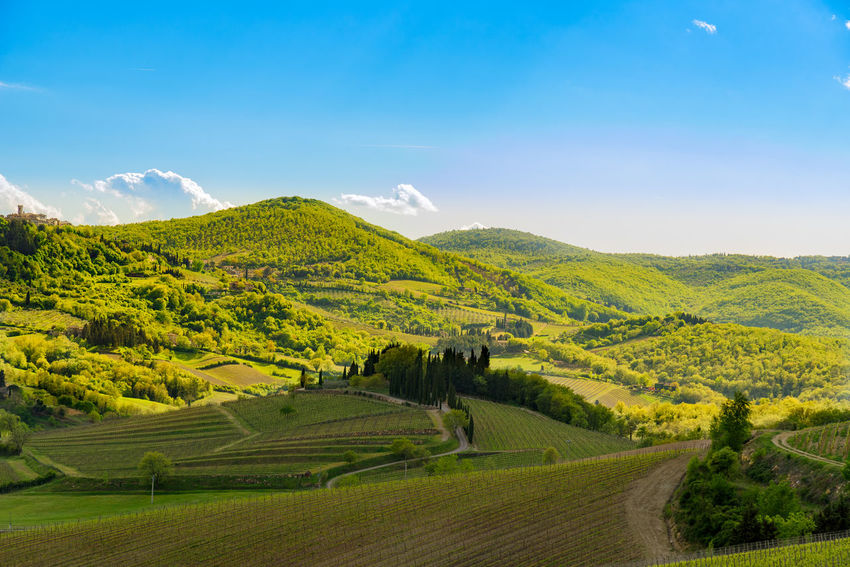 Agriculture Agriculture Beauty In Nature Chianti Field Field Hills Landscape Nature Nature No People Quiet Relaxation Rural Scene Scenics Siena Sky Sky And Clouds Springtime Tranquil Scene Tranquility Travel Travel Destinations Tuscany Countryside Wine