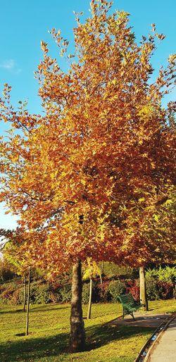 Eskişehir Eskisehir City Sazova Sazovaparkı Sazovapark Happy Time Autmncolors Autmn 2017 Autmnn Colors Autmn In Park Tree Tree Colors Garden Nature No People