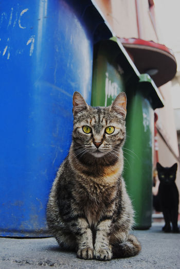 Portrait Of Cats By Garbage Cans