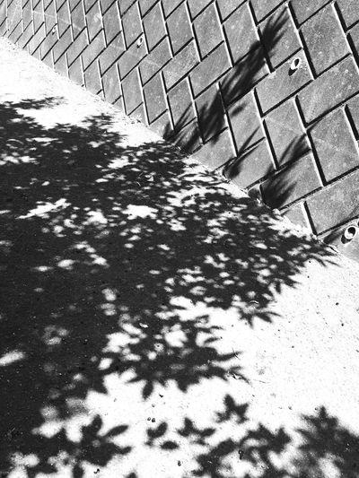 leaves B&w Shadow Sunny Day
