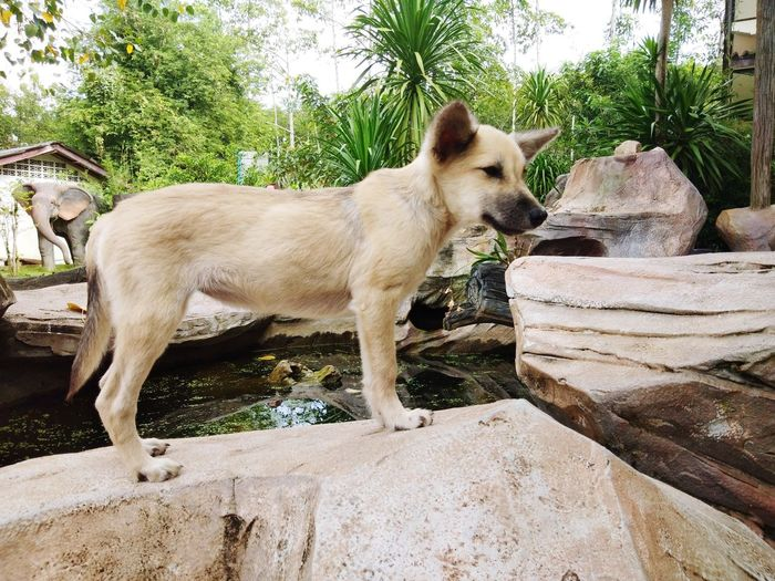 dog Model same the Lion King Pets Dog Tree Sand Water Animal Themes