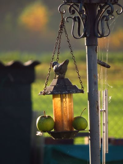 Apple Bird Bath Birds Chain Close-up Decoration Focus On Foreground Hanging Metal Metallic No People Old-fashioned Vogeltränke