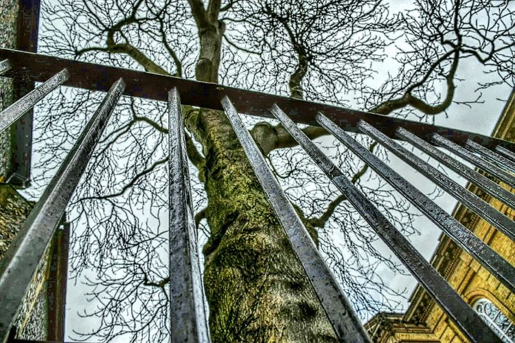 Looking Up Through The Railings TreePorn Old Part Of My City Taking Photos Spooky Atmosphere Churchyard Norwich Tree_collection  Ironrailings Grey Sky Roll On Spring Nikon D3300