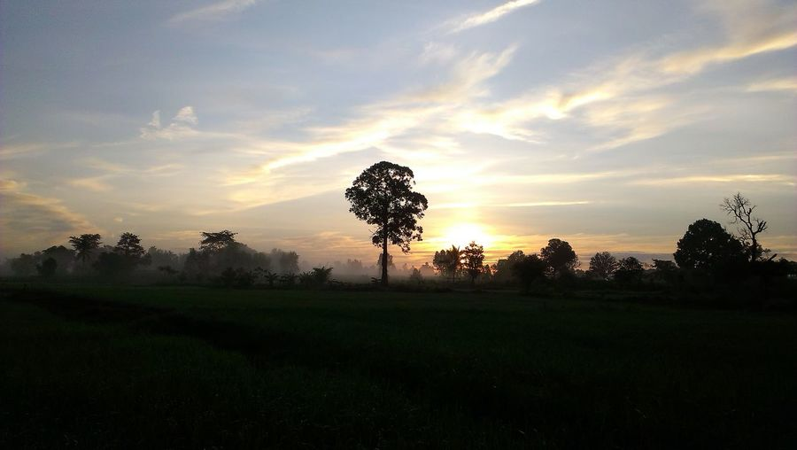 Trees on field against sky at sunset