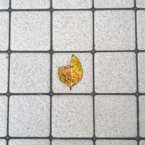 City Leaf Leaf Yellow Yellow Leaf Box Boxed Tiles No People City Leaves Day Outdoors Art