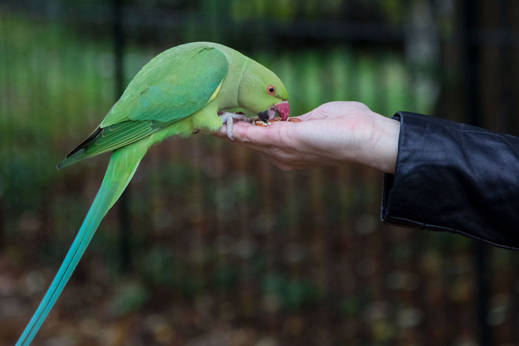 Close-Up Of A Bird Perching On Hand