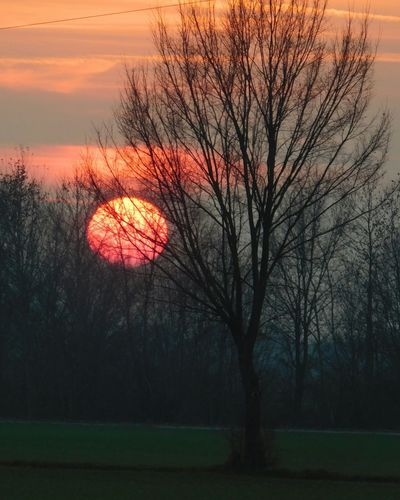 Sunset Sun Tree Winter Orange Orange Color Nature Nature_collection Italy Italia Mirano