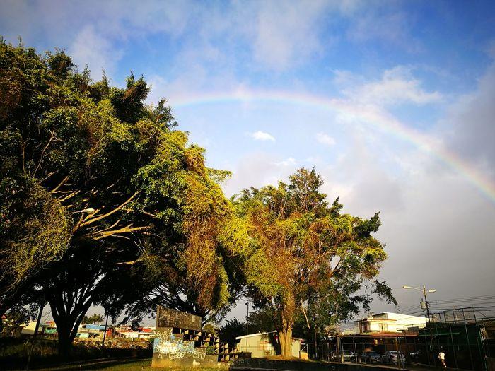 Tree Nature Sky Cloud - Sky Outdoors Rainbow No People