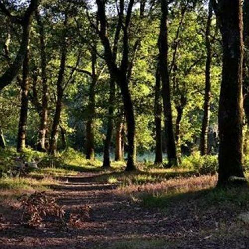Bosques mágicos Lugo BosquedaFervenza Mino nature