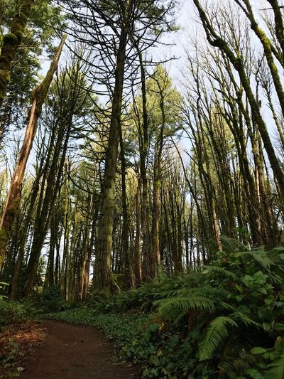 Pnwphotography PNW Outside Serenity In Nature Natural Area Nature Preserve Tree Plant Forest Beauty In Nature Land Tranquility Growth WoodLand Green Color Low Angle View Nature Scenics - Nature Day Non-urban Scene Tranquil Scene Sky No People Tree Trunk Trunk Outdoors