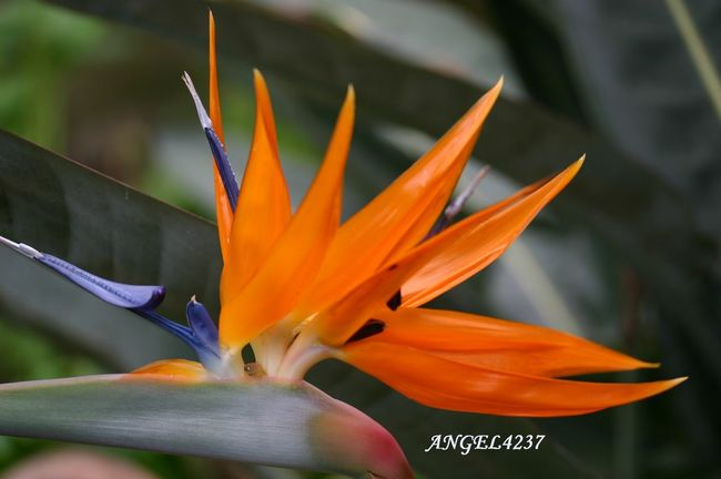MyExoticFlower Floralperfection BeautyAndMadness ForTheLoveOfPhotography