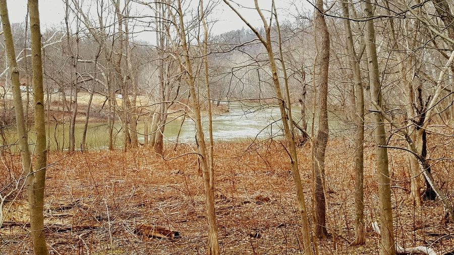 WHT Biking Bike Ride Trail Bikelife Pennsylvania Wht Outdoors Nature Beauty In Nature Water River River View Trees