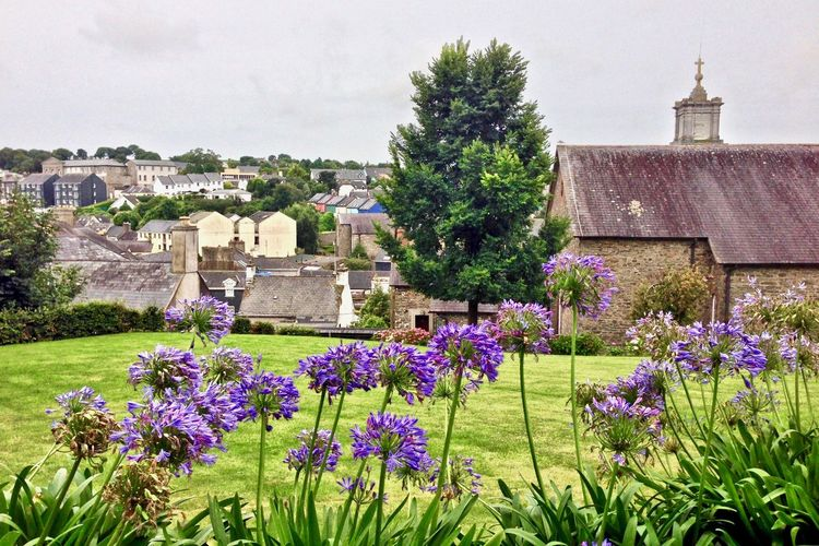 Mission Kinsale, Ireland Ireland🍀 Building Exterior Architecture Flower Built Structure Building History The Past No People Outdoors Purple Old Church Old Houses Place Of Worship Flowering Plant Tree Grass Day Row House Rooftops Row Houses