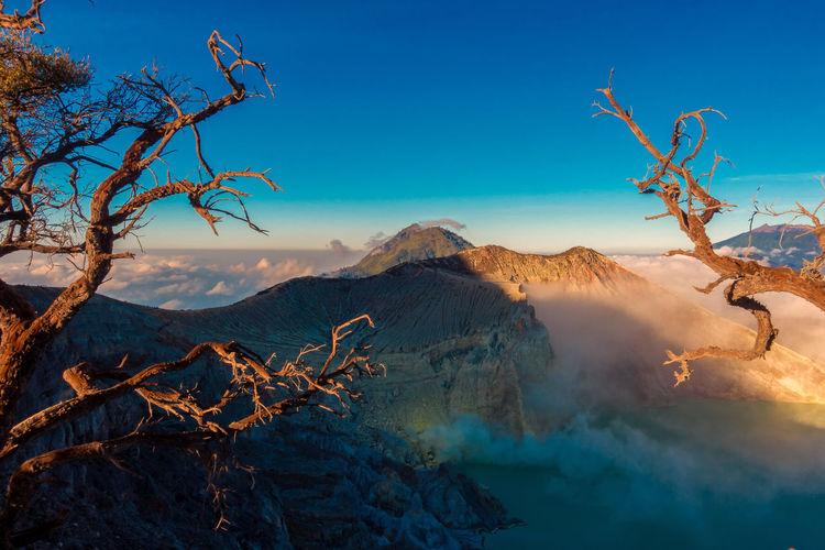 Bare tree against mountain range