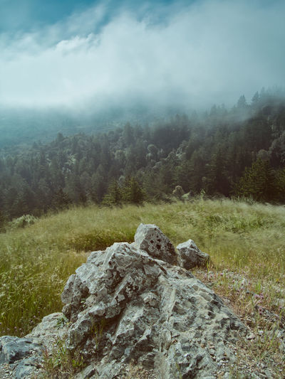 Windy Hill OSP. Clouds Nature Sky Landscape Fog Tree Day Clouds And Sky Outdoors Forest Rock Tranquility Wind Mountain Environment Bay Area Beauty In Nature Solid No People Scenics - Nature Windy Hill Skyline Palo Alto