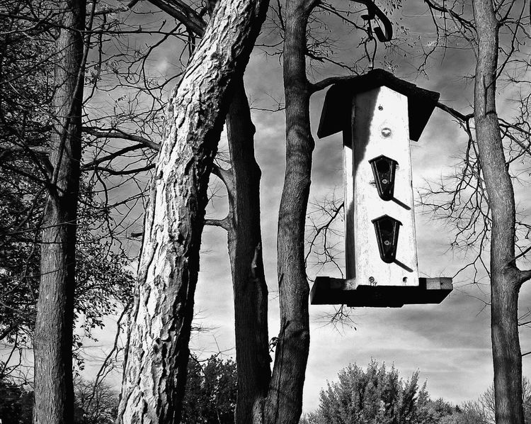 All are welcome~ Birdfeeding Birdfeeder B&w Photography B&W Collection B&w Nature Check This Out B&W Collections Trees Mybackyard From My Point Of View Nature On Your Doorstep Nature Photography Tadaa Community Outdoors Autumn Birdwatching Hello World Enjoying Life End Of Summer Relaxing Naturelovers Nature_collection