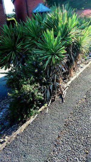 Bushes Bush Pavement Green Spikey