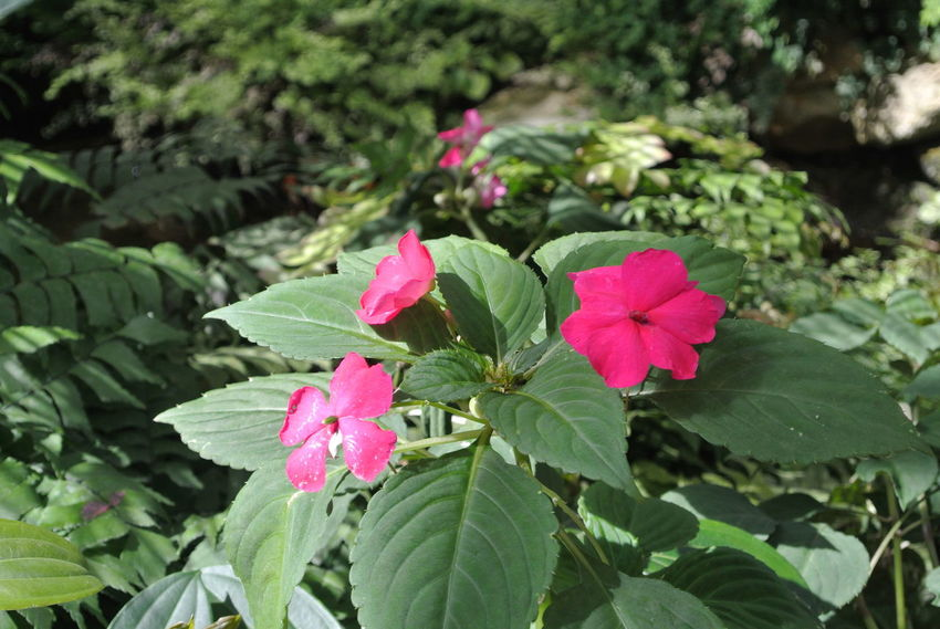 Pink Color Leaf Flower Plant Growth Green Color Nature Beauty In Nature Flower Head Day Outdoors No People Close-up