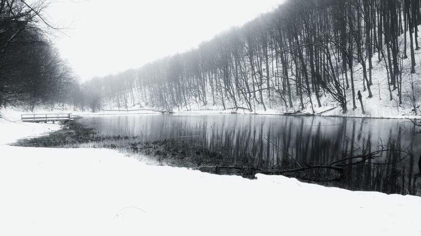 dreamy Park Papuk Jankovac Wood Weather Oneplus Oneplus3 Shotononeplus Snapseed Cold Smartphone Cameraphone Landscape Photography Onepluslife Oneplusphotography Oneplus3photography Oneplusphotowalk Smartphonephotography Tree Outdoors Winter Nature Snow Day Water Lake Cold Temperature Beauty In Nature No People Scenics Sky