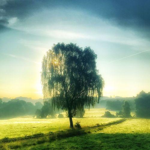Morning has broken Tree Tranquility Nature Landscape Field Outdoors Sunlight Grass No People Sky Eyem Nature Lovers  EyeEm Best Shots - Nature EyeEm