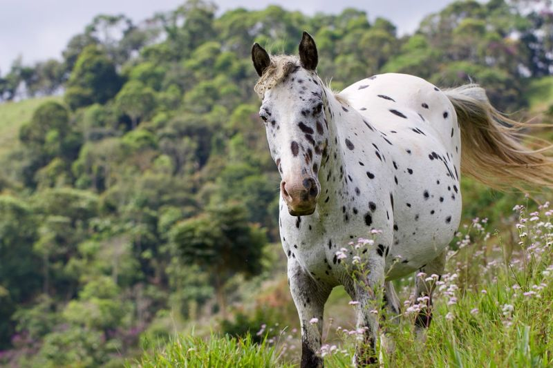 Dalmatian Horse Rural Scene Landscape_Collection Farm Life Rural Scenes Breed Dalmatian Dalmatian Horse EyeEm Nature Lover Farm Minas Gerais Nature Santos Dumont Spotted Wild Horse Animal Animal Themes Animal Wildlife Cavalo Domestic Domestic Animals Equine Equine Photography Horse Horse Photography  Mammal Nature_collection Spotted Spotted Horse Wild This Is Latin America Agricultural Field The Great Outdoors - 2018 EyeEm Awards
