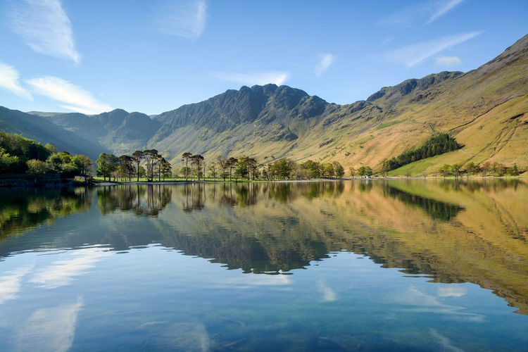 Buttermere Pines Haystacks Haystacks Mountain Reflections On The Water Reflections ☀ The Lone Tree At Buttermere Buttermere Buttermere Fell Buttermere Lake Reflections Reflections In The Water