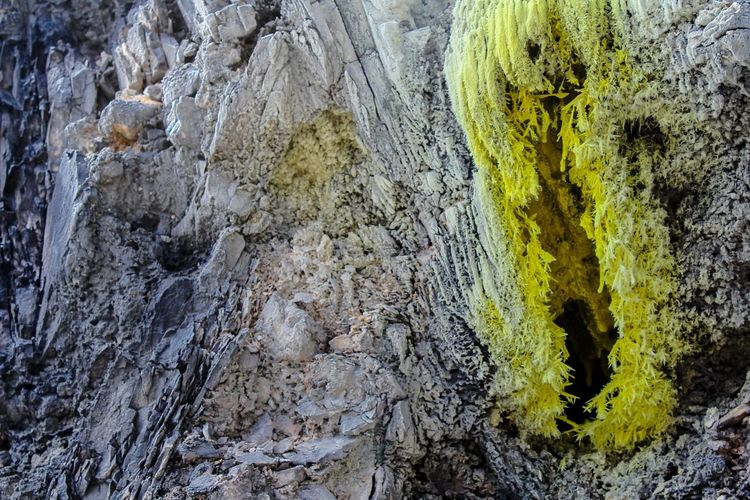 Close-up of rock on tree trunk