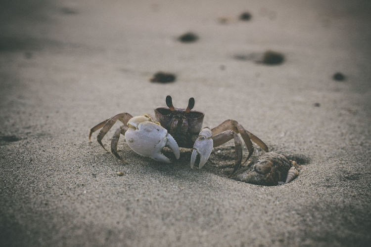 Close-up of crab on sand at beach