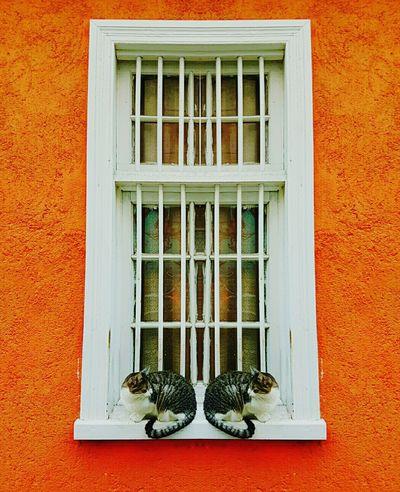 Dejavu Cats Lucky Cat Check This Out Hello World Valpo Eye4photography  DoorsAndWindowsProject