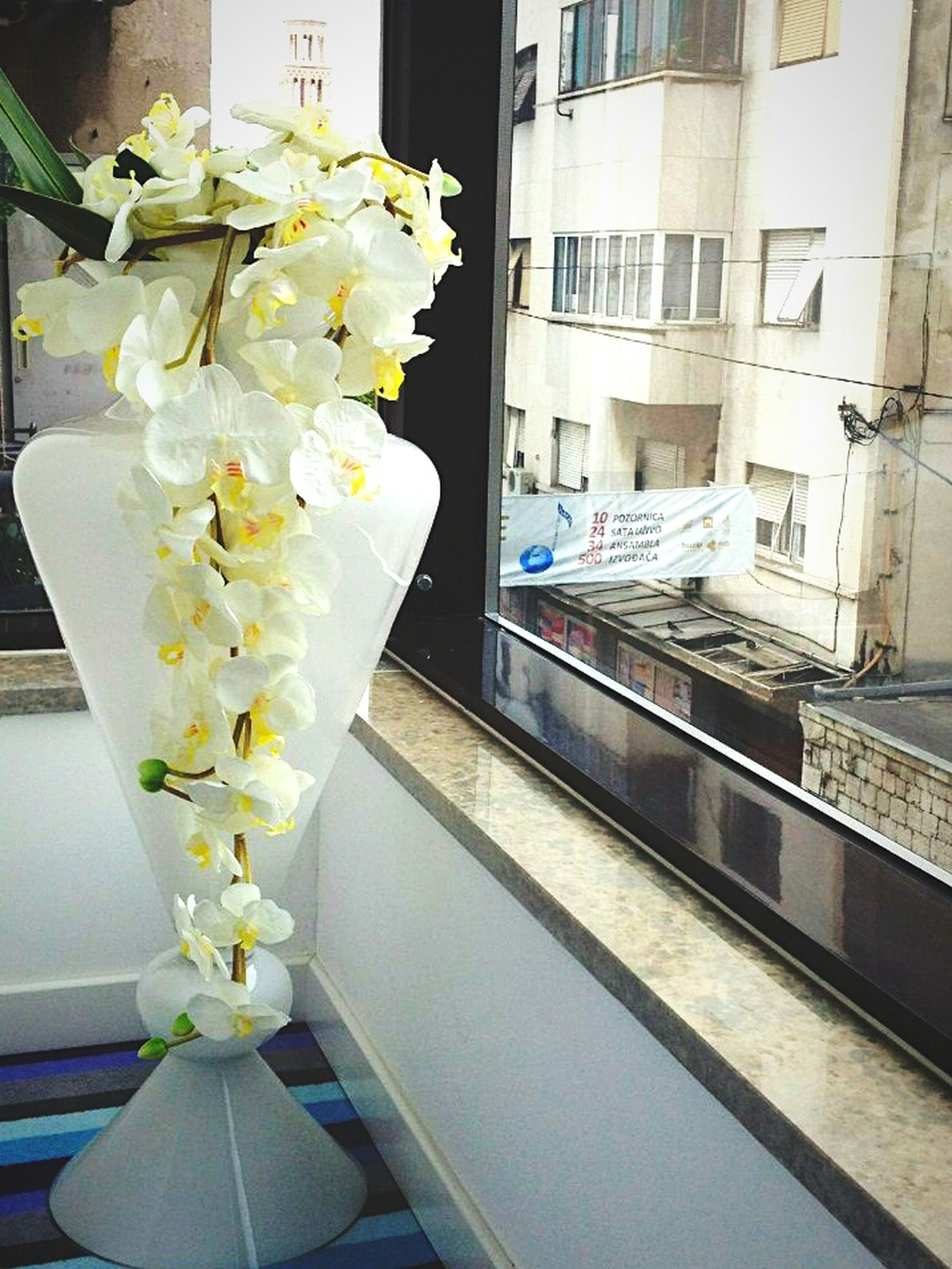 flower, indoors, window, architecture, freshness, built structure, vase, fragility, potted plant, growth, glass - material, white color, plant, petal, flower pot, no people, building exterior, day, high angle view, sunlight