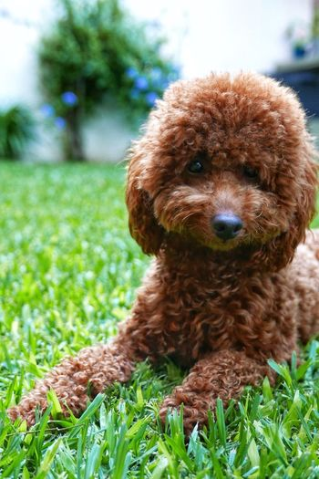 Jack, my dog. #Dog Dog Love Popckorn Domestic Animals Grass Cute Looking At Camera Green Color Portrait Focus On Foreground No People Puppy Close-up Nature Day Outdoors