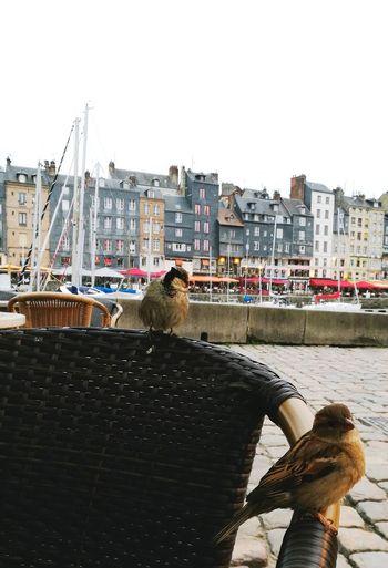 Oiseaux Urbains Piaff Vieuxbassin Honfleur, France Apéro ;) Détente