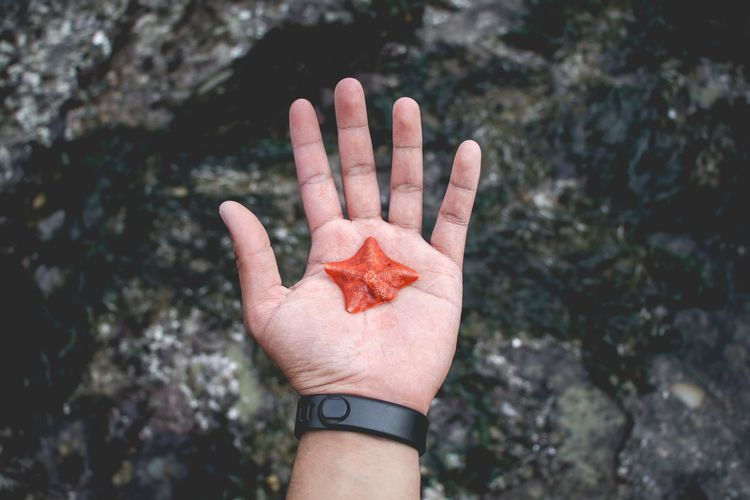 perfect Starfish  Fragility Fragile Sealife Wildlife Nature Holding Starfish  Curiosity Exploring Beach Hands Human Hand Palm Human Finger Close-up Wrist Finger Index Finger Thumb Personal Perspective Cropped Hand Human Joint Fingernail Fingerprint Thumbs Up Body Part Smart Watch Wrapping