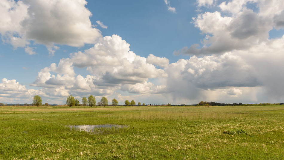 Havelland Germany Naturpark Westhavelland Radsport Wanderlust Agriculture Beauty In Nature Cloud - Sky Day Field Grass Landscape Nature No People Outdoors Rural Scene Scenics Sky Torusim Tranquility Tree Wandern