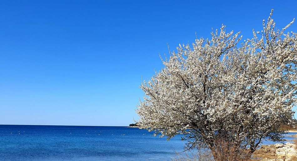 View of blue sea against clear sky