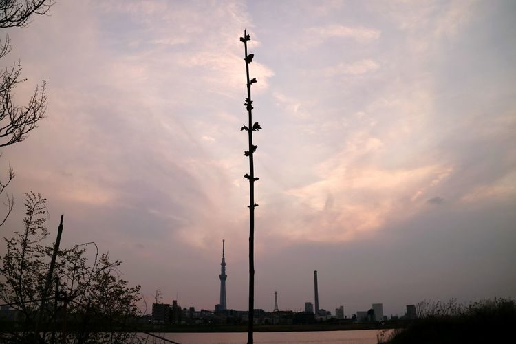 Onetree Skytree Tokyo Sky Tree Tower Chimmny Sky Skyporn Cloud Cloudporn Sunset Sunsets River Riverside Tokyo Japanese  Tree