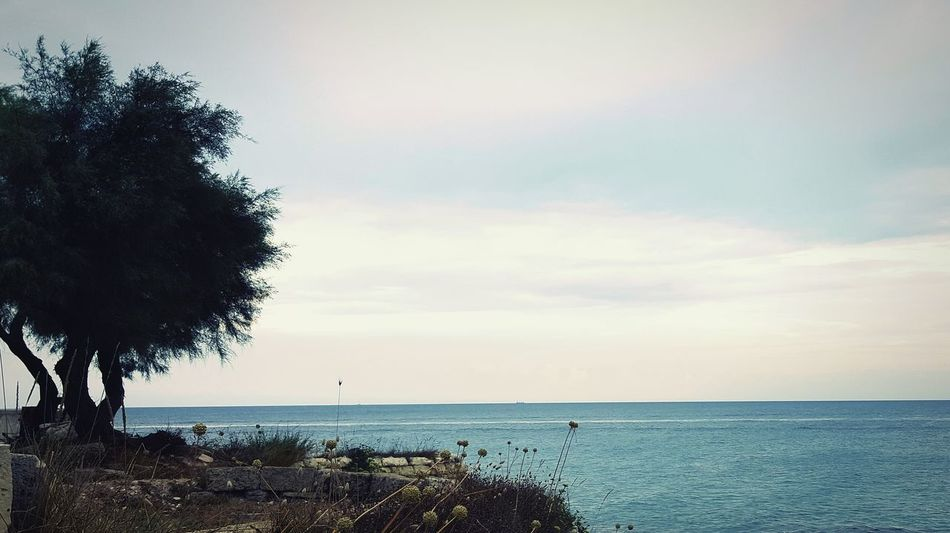 EyeEm Nature Lovers Tree Silhouette Seascape Sea Sky And Sea Panoramic Landscape Nature_collection Landscape_collection EyeEmNatureLover EyeEm Nature Lover Eyeemsea Mediterranean Sea