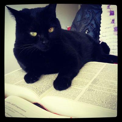 Quando si cerca di fare i compiti.. Cat Homework Shesright Boring bored
