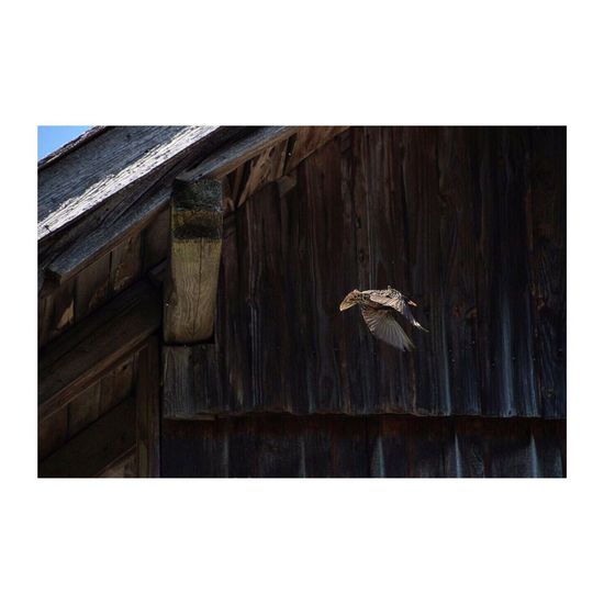 Auto Post Production Filter No People Wood - Material Animal Themes Day Outdoors Architecture Nature Close-up Bird Travel Destinations Bird Photography Birds Flying Perspectives On Nature