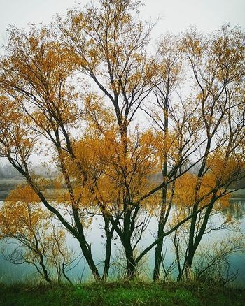 A view of the river I've never seen before Trees Fallcolors Newperspective Sacramentoriver Exploring Norcal