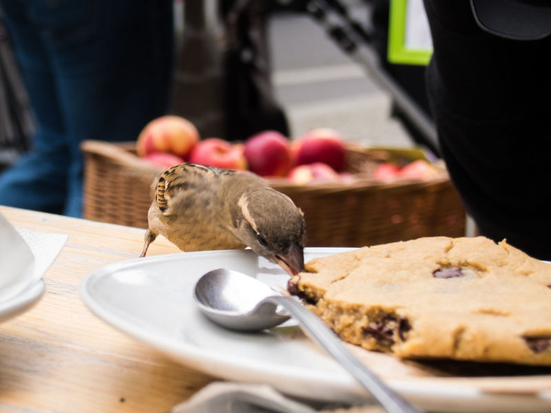 Berlin City Cookies Dieb Animal In The City Animal Themes Animals In The Wild Bird Close-up Day Eating Food Food And Drink Frech Freshness Little Bird Mammal One Animal Plate Sparrow Spatz Street Streetphotography Table Thief My Best Travel Photo