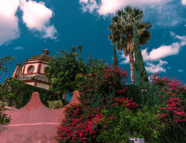Day Outdoors San Miguel De Allende Mexico Travel Travel Destinations Tranquility Travel Photography Architecture Architecture_collection Colorful Town Town Scape Plant Tree Sky Religion Place Of Worship Built Structure Cloud - Sky Belief Building Building Exterior Nature Spirituality Growth No People Low Angle View The Past Shrine